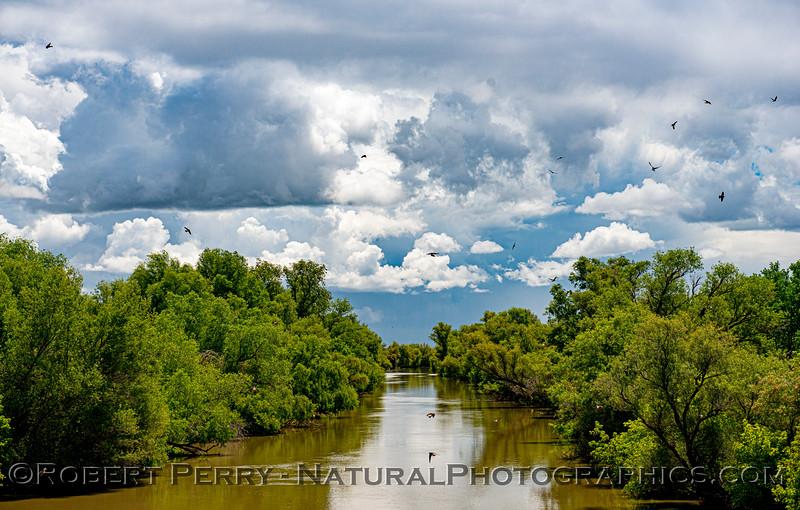 clouds storm Petrochelidon pyrrhonota cliff swallows Colusa Basin Drainage Canal 2020 05-18 Colusa Cnty-b-169