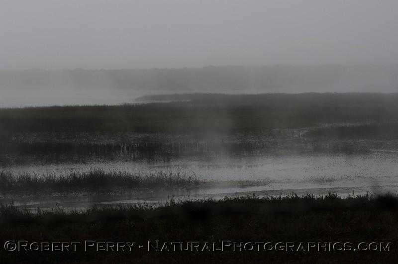 Fog 2013 03-12 Mugu Estuary-028
