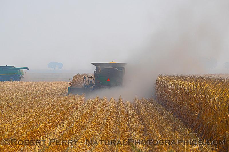 farm equipment corn harvesting 2020 10-03 Staten Island-019