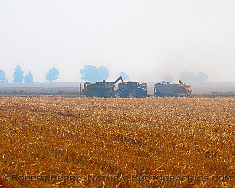 farm equipment corn harvesting 2020 10-03 Staten Island-003