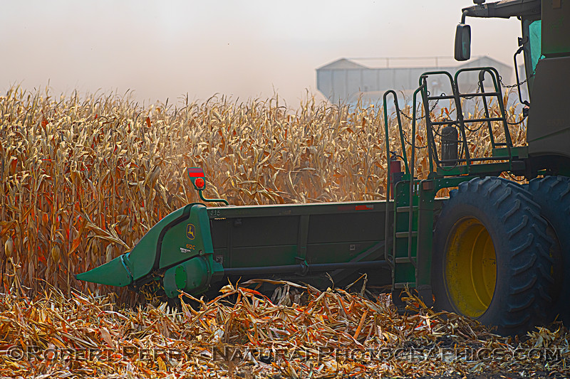 farm equipment corn harvesting 2020 10-03 Staten Island-009