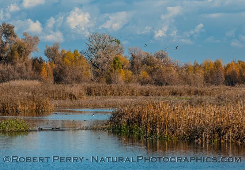 wetlands view 2016 12-06 Sacramento NWR-005