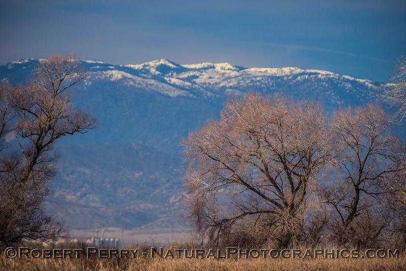 scene Snow Mountain Mendocino forest 2018 02-01 Colusa NWR--002