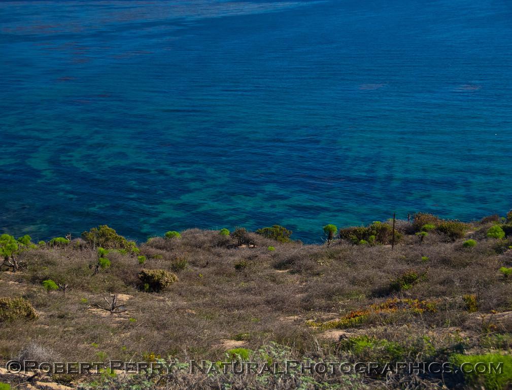 clear water Dume Cove 2012 12-20 Big Dume-002