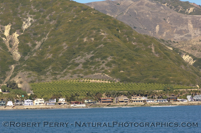 Beachfront homes and orchard, Ventura County.