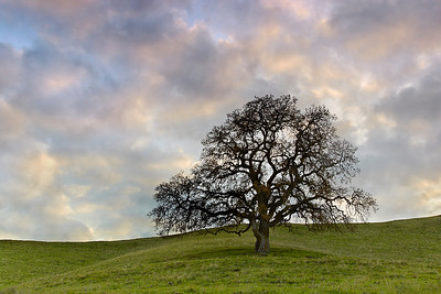The sun sets behind a lone oak tree in Lafayette, California.  Lone Oak #1 is a long exposure version of this image.