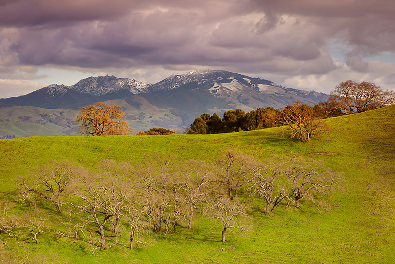 A winter storm dusted the top of Mt. Diablo with snow on February 20, 2011.  I did not want just 'a photo of snow on Diablo', but rather an entire composition with the structural dendritic branches of the oaks and some light showing off the Oak in front of Diablo.