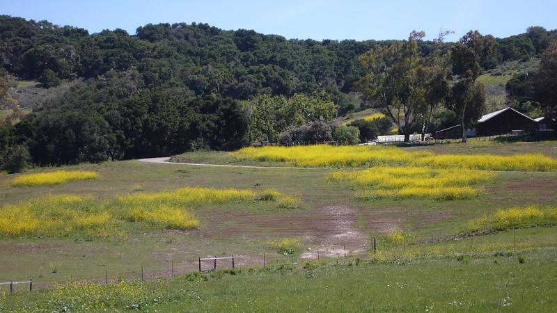 California Hwy 1 - Roadside