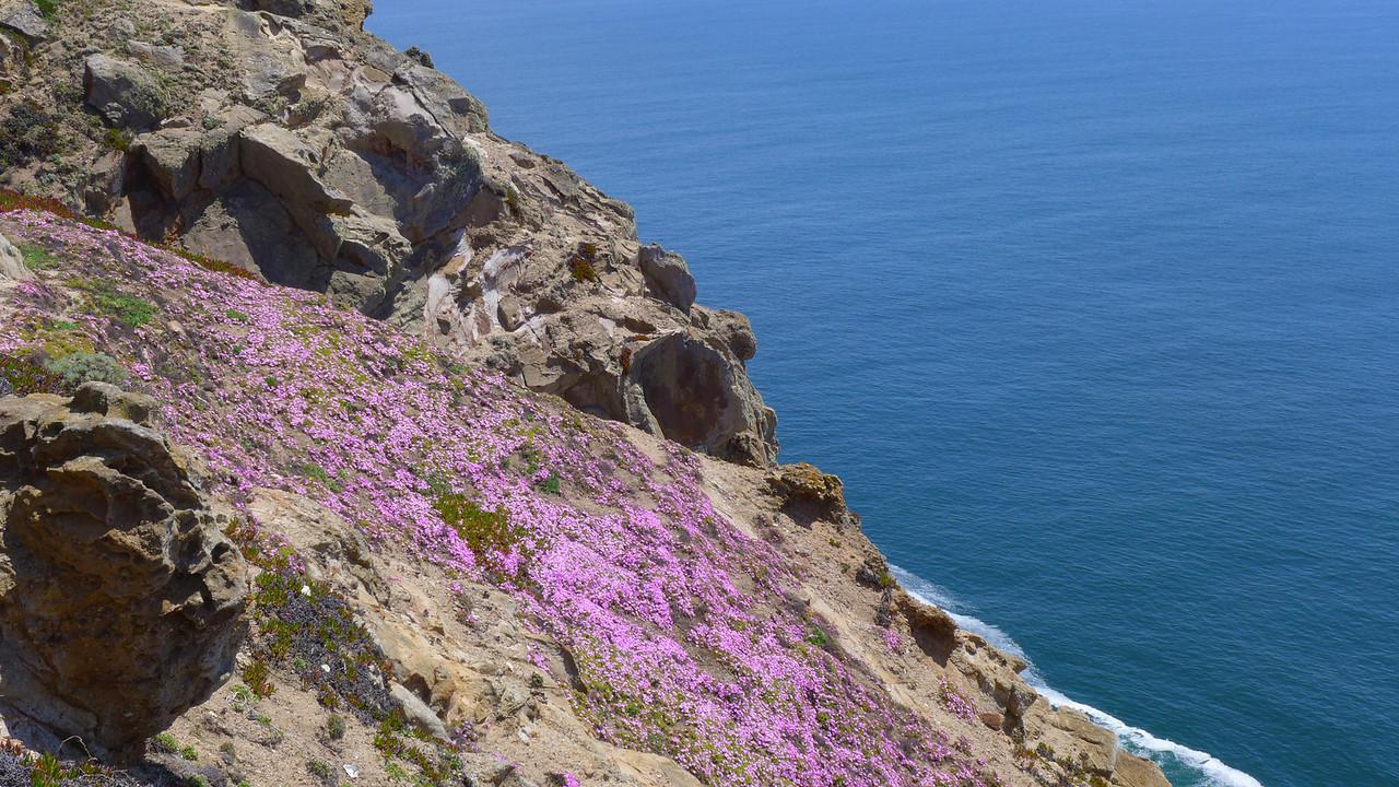Point Reyes Flora