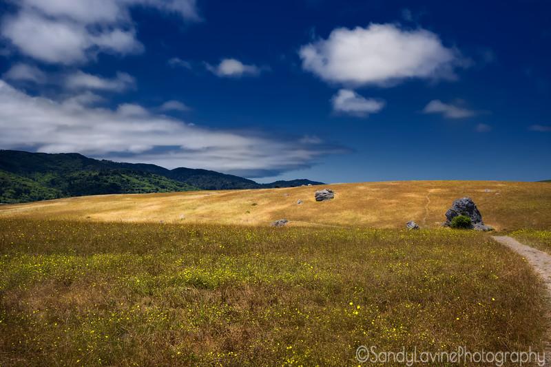 Tomalas Bay Hillside