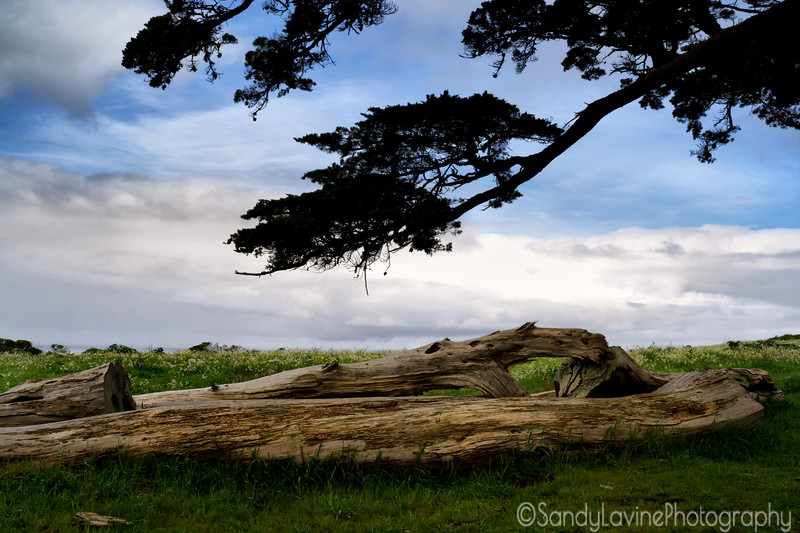 Pierce Ranch Cypress Tree Log and Sky