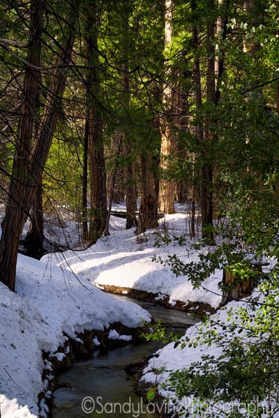 Yosemite Tributary and Trees