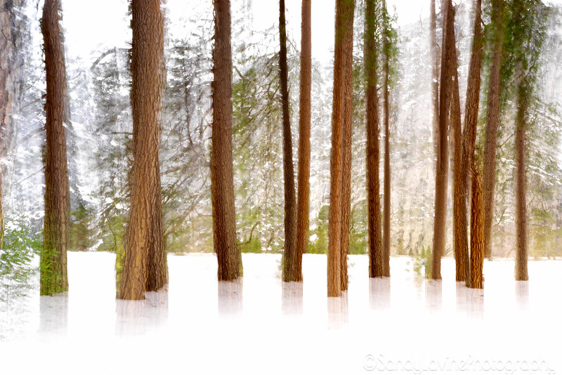 Trees Floating In The Snow