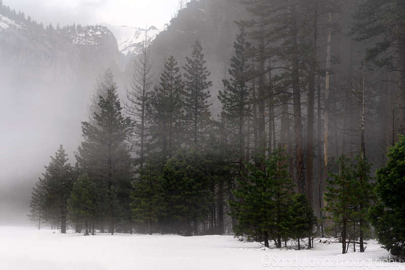 Yosemite Valley Pines and Snow