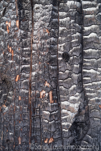 Burnt Bark One
