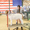 Goat and Pig Show