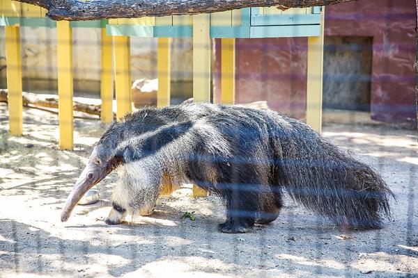 9-17-18 Atascadero Zoo University Women Cambria-9601