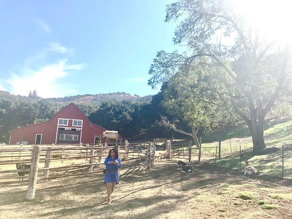 10-16-17 Stepladder Ranch IMG_E0484