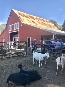 10-16-17 Stepladder Ranch IMG_E0493