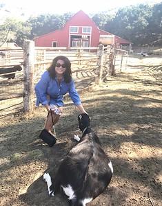 10-16-17 Stepladder Ranch IMG_E0486