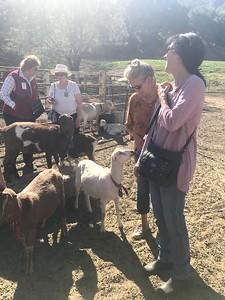 10-16-17 Stepladder Ranch IMG_E0464