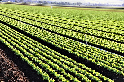 Correctly identify this crop and you could win a two night stay at Motel Six in Solano, CA