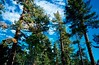 Mount San Jacinto State Park, Palm Springs, CA