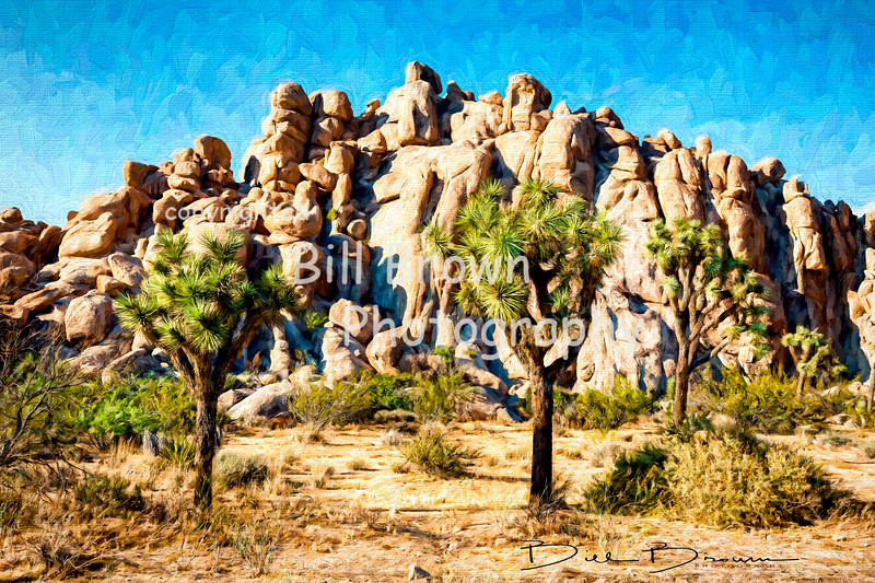 Joshua Tree Impression