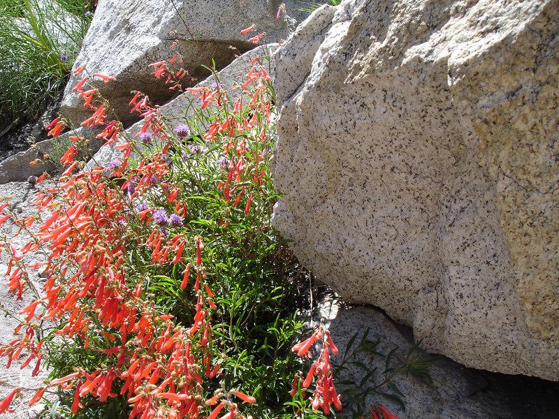 Climbing Penstomen and Chia.<br /> <br /> High Sierra: North Fork Big Pine Creek: Sam Mack Meadows: High Glacier Camp: Palisade Glacier: Palisades: Mount Sill: Swiss Arete