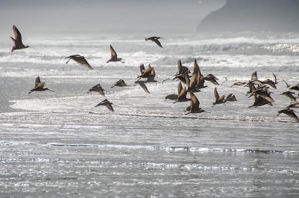 Winter birds in Morro Bay, San Luis Obispo County, California