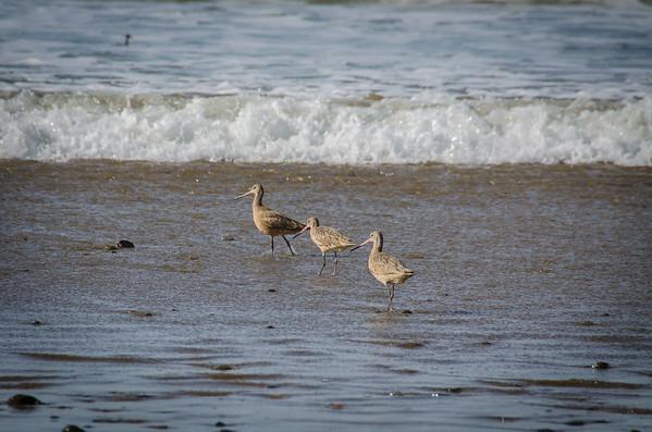 Best beach for bird watching: North Point Beach, Morro Bay, California