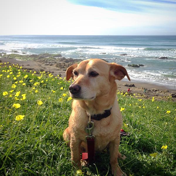 A muddy, happy dog!   Best beaches in California: North Point Beach, Morro Bay