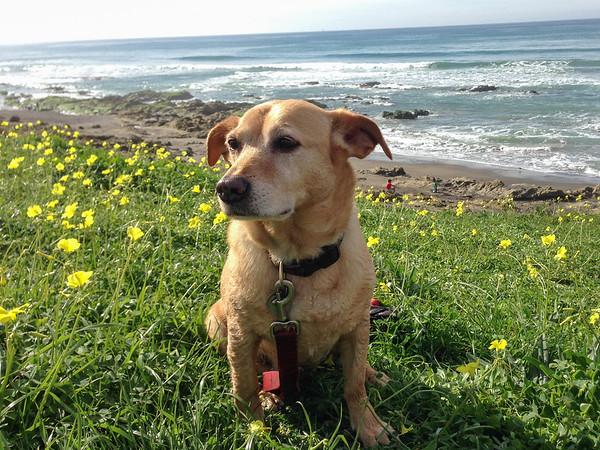 Dog Beach Morro Bay