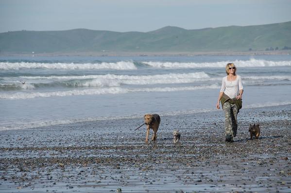 North Point Dog Beach, Morro Bay, California