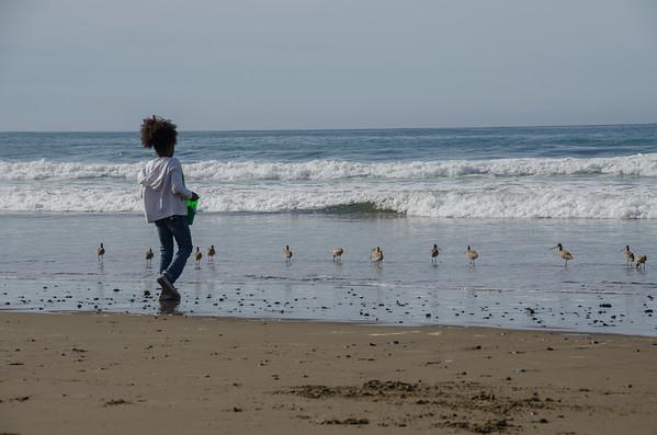 Best beaches for bird lovers: North Point Beach, Morro Bay, California