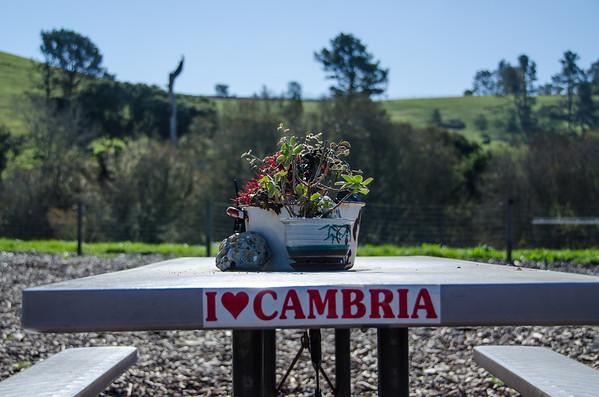 Cambria Dog Park | Dog Friendly Central Coast