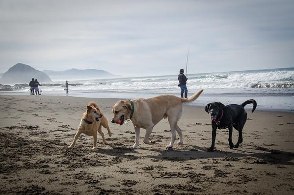 Dog beach on the Central Coast - North Point Beach, Morro Bay