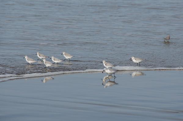 Shore birds at North Point Beach, Morro Bay, California