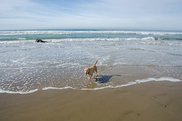 Best dog-friendly beaches in California: North Point Beach, Morro Bay