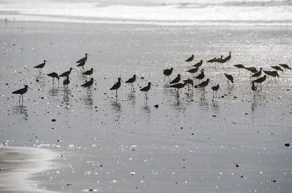 Best California beaches for bird lovers: North Point Beach, Morro Bay