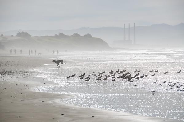 Winter birds on the Central Coast, Morro Bay, California