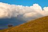 Oak on Hillside, Del Valle Regional Park, Livermore CA