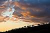 Sunset II, Del Valle Regional Park, Livermore CA