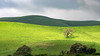 Spotlight on Oak Tree and Green Hills
