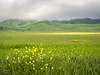 Flowers and Green Hills on Foggy Morning