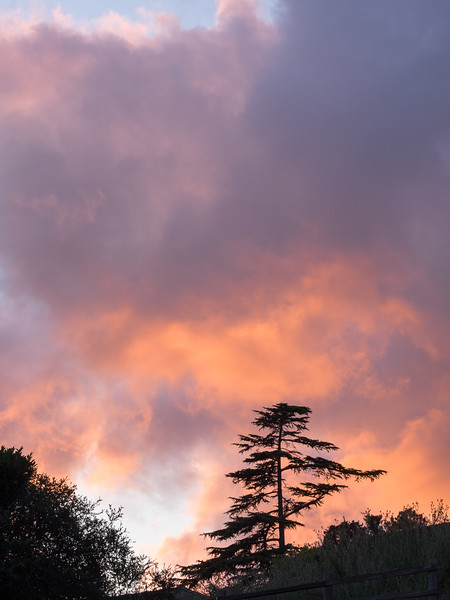 Trees and Shrubs Silhouetted against Colorful Sunset Sky