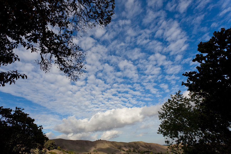 Clouds, East Bay Hills, Framing Trees, Huckleberry Regional Park, Oakland CA
