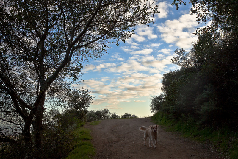 Dog on Walk, Roberts Regional Park, Oakland CA
