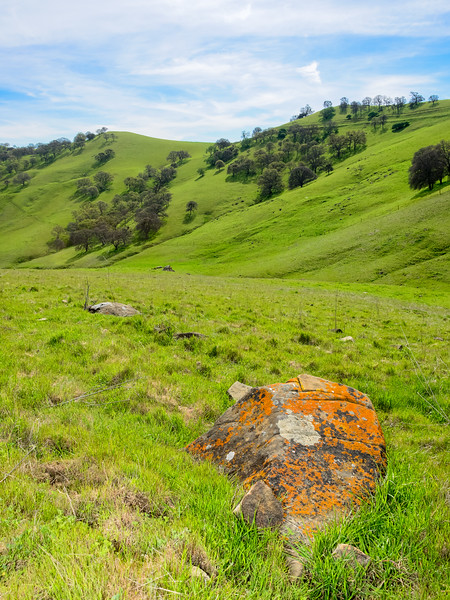 Rock with Orange Lichen and Spring Landscape