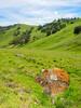 Rock with Orange Lichen and Spring Landscape